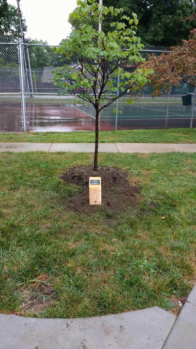 2016 Mitchell Honoree Tree