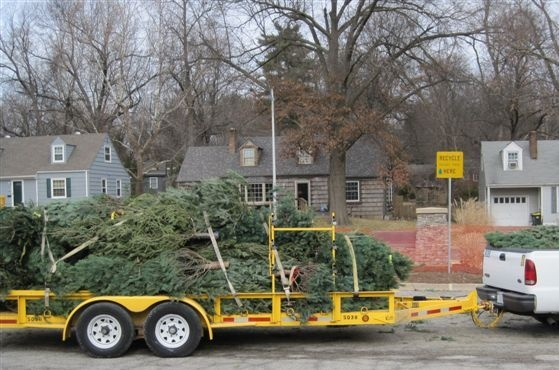 Donated christmas trees